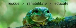 Reptile Rehabilitation Qld